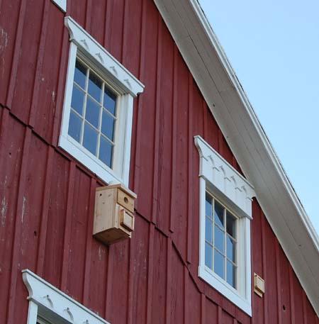 Northern Flicker Nest Box